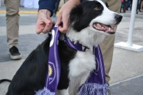 Even furry friends showed their purple pride at Orlando City SC's Happy Hour event in Lake Nona on Jan. 29, 2016. (Rosie Reitze / Orlando Soccer Journal).